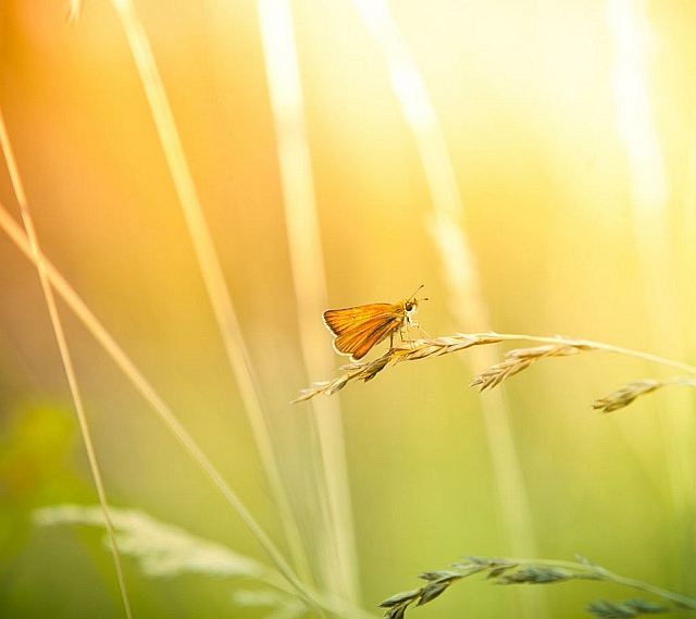 Click image for larger version  Name:butterfly_and_wildflower.jpg Views:369 Size:193.0 KB ID:1384181