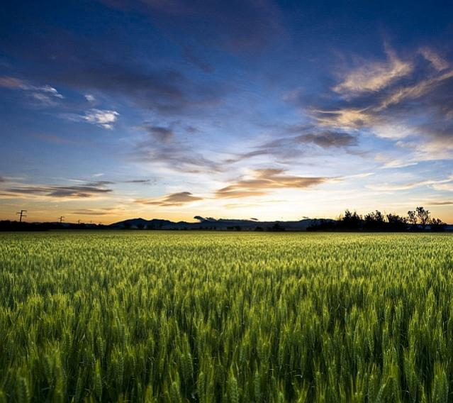 Click image for larger version  Name:field_at_sunset.jpg Views:338 Size:58.9 KB ID:1384182