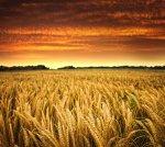 orange_field_hd1080p.jpg