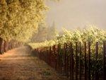Vineyard-HD-Wallpaper.jpg